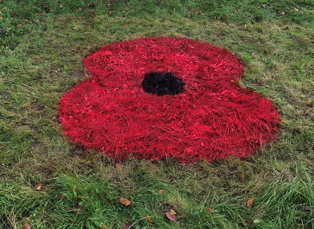 We will remember them: giant poppies bloom ahead of Remembrance Day
